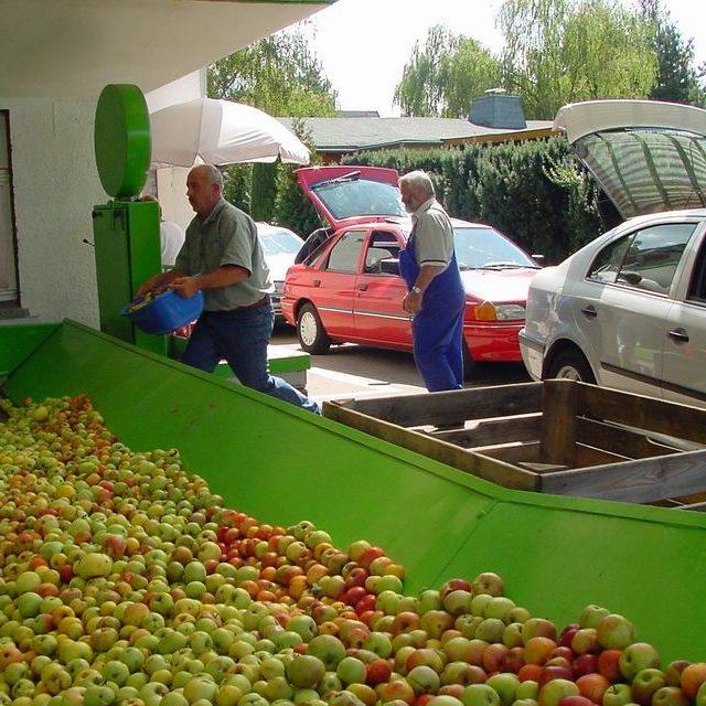 Annahme und Wiegen von Äpfeln