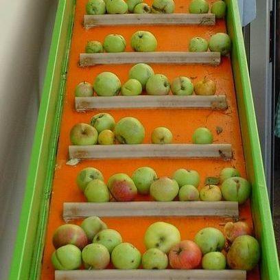 Auf einem Transportband gelangen die Äpfel dann zur Apfelwäsche. Zunächst werden die Äpfel gewogen und die Qualität kontrolliert.