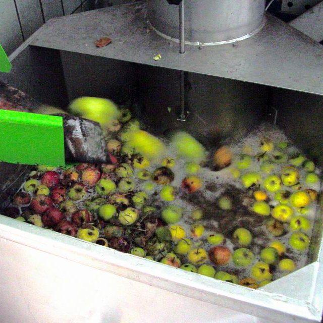 Nach dem Waschen gelangen die Äpfel in eine Rätzmühle. Dort werden sie gemaischt, also zerkleinert.