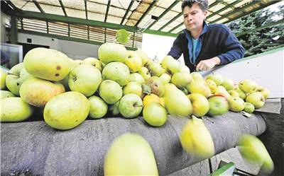 Wenig Äpfel, kaum Wartezeiten Weniger Kunden als sonst bringen ihr Obst in die Kelterei Sell. Die diesjährige Witterung hat zu Einbußen geführt.